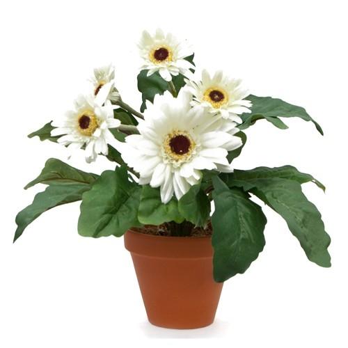 Gerbera plant plantslive buy plants online india ps mightylinksfo Choice Image