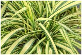 buy-plantslive-furkeria