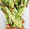 buy-plantslive-Lucky Bamboo Dragon Tower Arrangement - Plant
