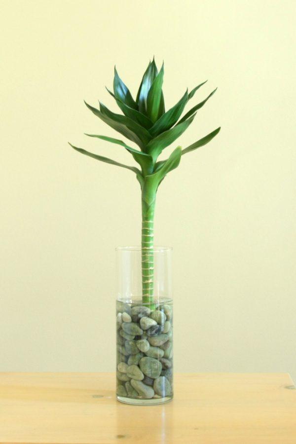 plantslive-Lucky Bamboo Lotus Arrangement - Plant