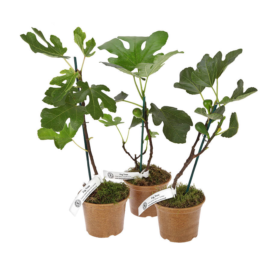 original_fig_plantslive