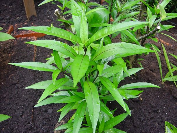 Plantslive – Buy Plants Online India – Page 5 – Plantslive in